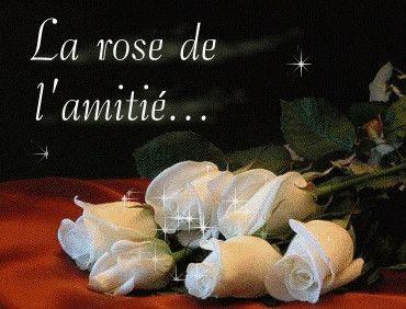 """Résultat de recherche d'images pour """"rose et amitié"""""""