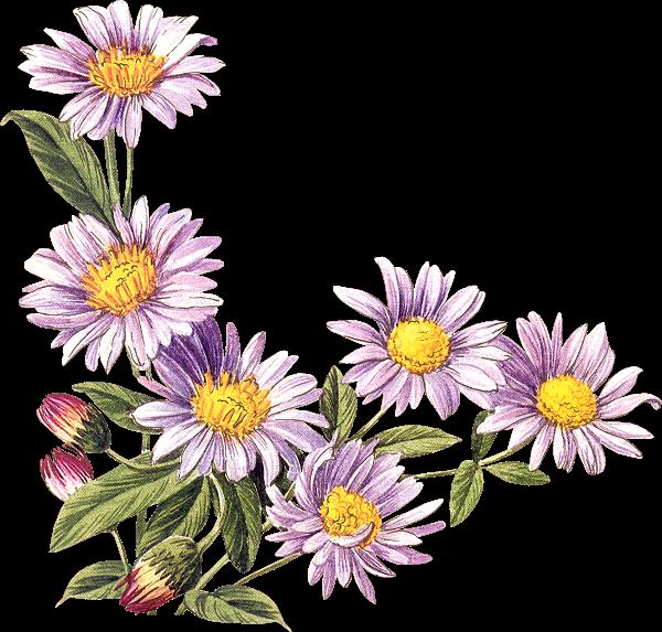 Petites fleurs ceuillies au jardin de mamietitine for Fleurs au jardin